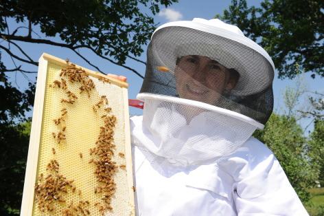 honey bee decline research